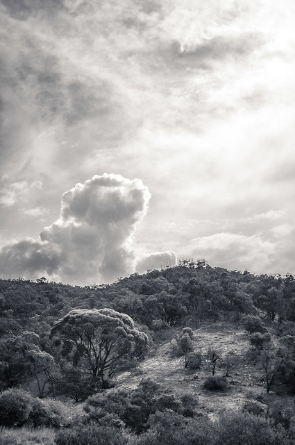 Australian Hillside