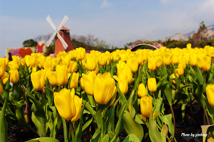 台中中社觀光花市