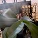 20120310_orkideak eta landareak-26