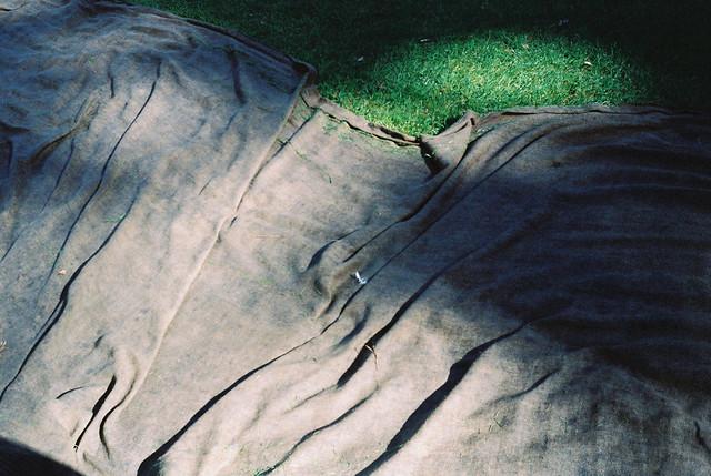 grass_03