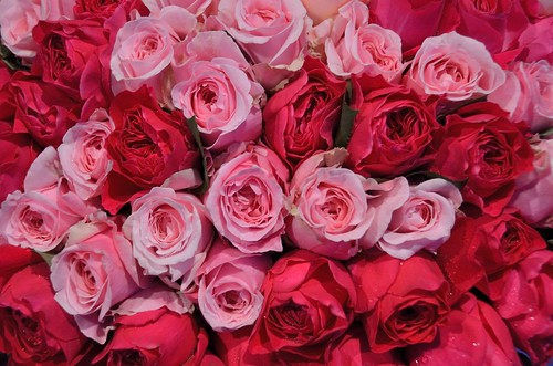 English roses for sale
