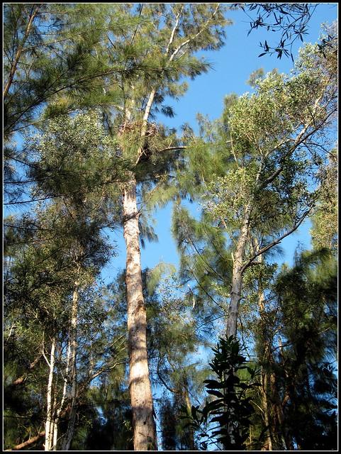 Eagle nest 20120330