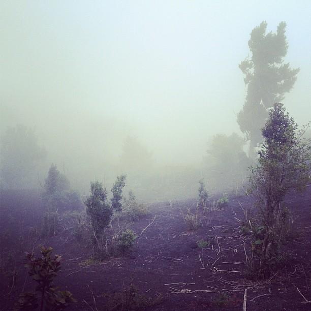 Misty climb