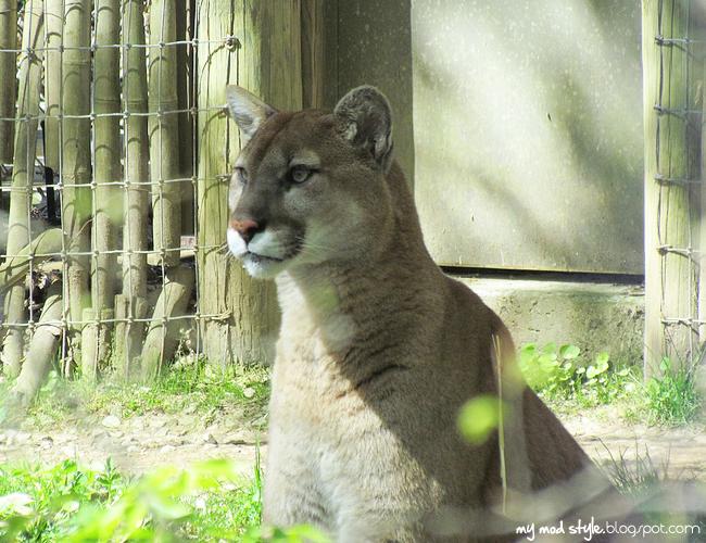 Columbus Zoo 4