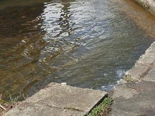 水かさが増した堰