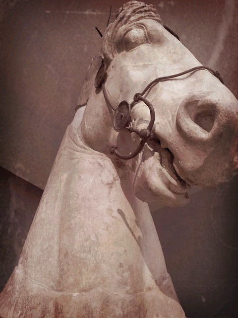 Image Result For Images Of Horse