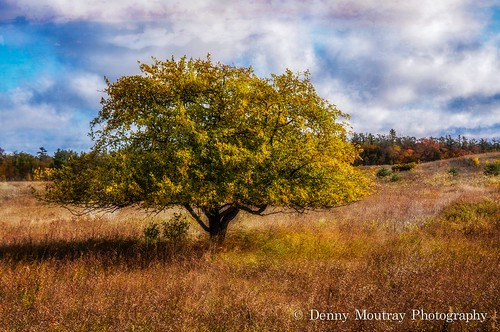Standing Alone by DMoutray - Denny Moutray Photography