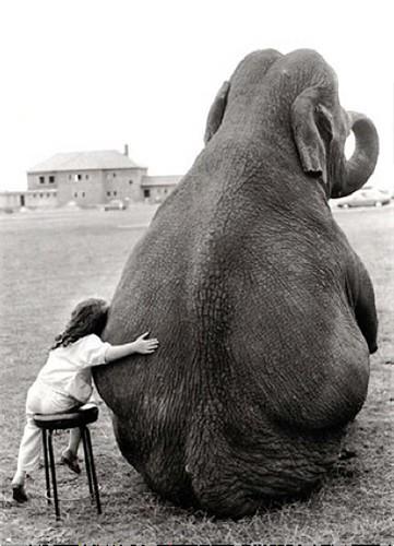 girl and elephant photo