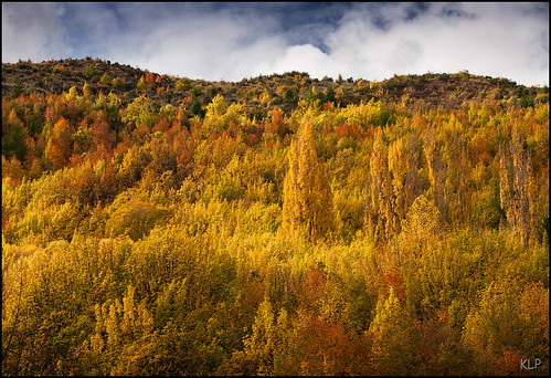 new autumn trees newzealand orange colour fall yellow canon island gold poplar south central hills zealand sycamore southisland otago 5d arrowtown 70200mm polariser rowanberry gndfilter