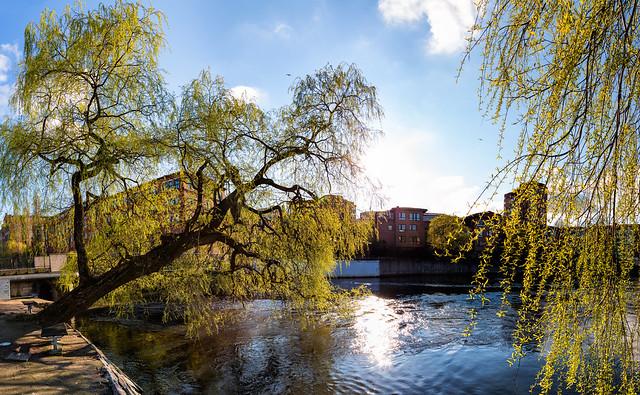 Spring checklist: Willow