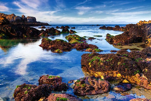 Asilomar Tide Pools,  Monterey, CA 2010