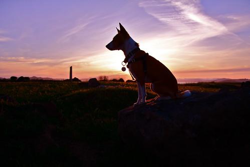 Bowpi-sunset2