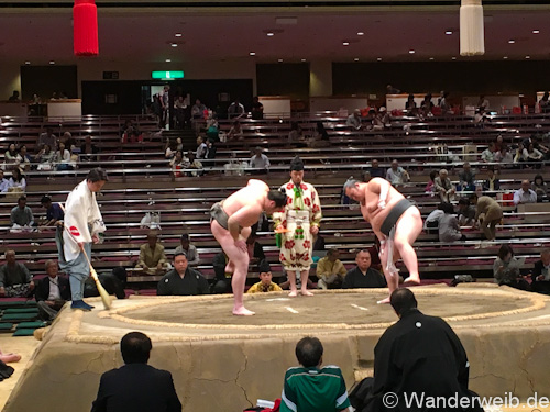 sumo (22 von 53)