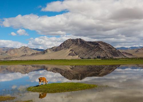 mongolia mn bayanulgii