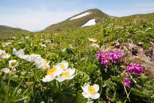 20160611-焼石岳-0688.jpg