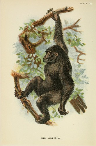 022-El gorila-A hand-book  to the primates-Volume 2-1896- Henry Ogg Forbes