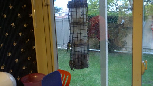 Popular bird feeder