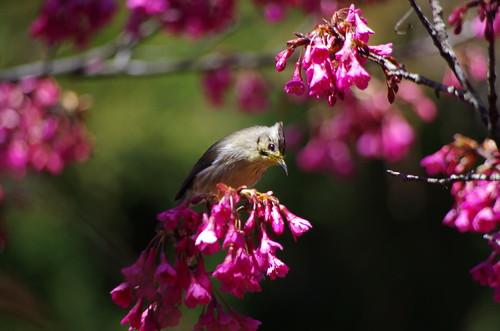 2011阿里山春天
