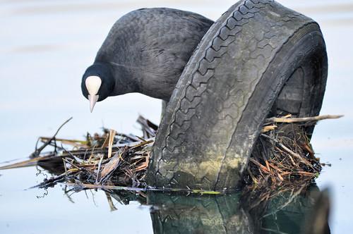 Il nido pneumatico by Davide Comotti