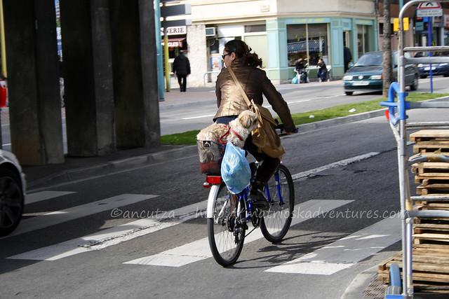 foto con cane nella cestino della bicicletta