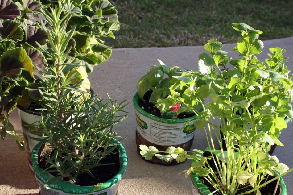 How To Create Your Own Herb Garden Vintage Style