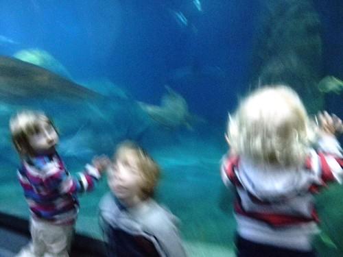 blury aquarium pictures