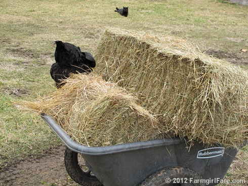 Hay inspectors 3 - FarmgirlFare.com