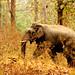 Tholpetty Wildlife Sanctuary image