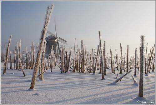 winter mist snow holland netherlands skating explore kinderdijk alblasserwaard molen koud winterlicht wimzilver molentocht2012