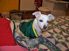 Quasi models the new Oregon Ducks jersey