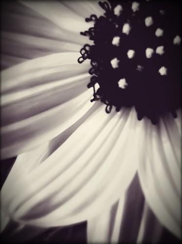 251/365- Frail by elineart
