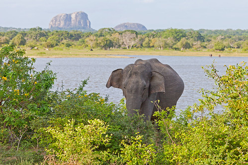 Elephant Rock and Elephant, Yala National Park