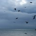 Small photo of In February skies. A flock of Seagulls.