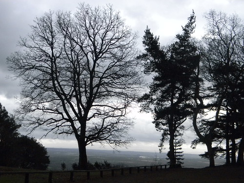 Trees, Leith Hill