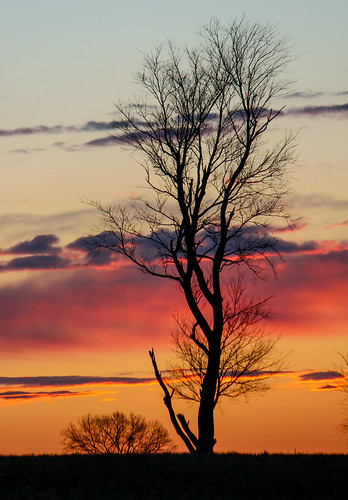 morning trees sky tree silhouette clouds rural sunrise landscape dawn colorful country predawn jennifermacneilltraylor