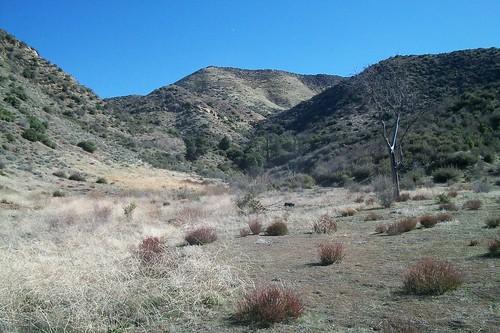 View toward Bucksnort