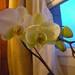 2012-03 orkideak-4