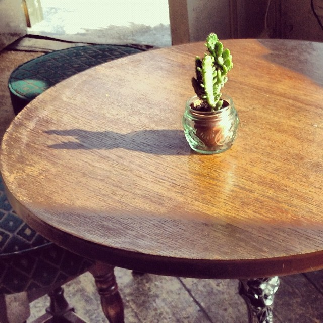 Table cactus