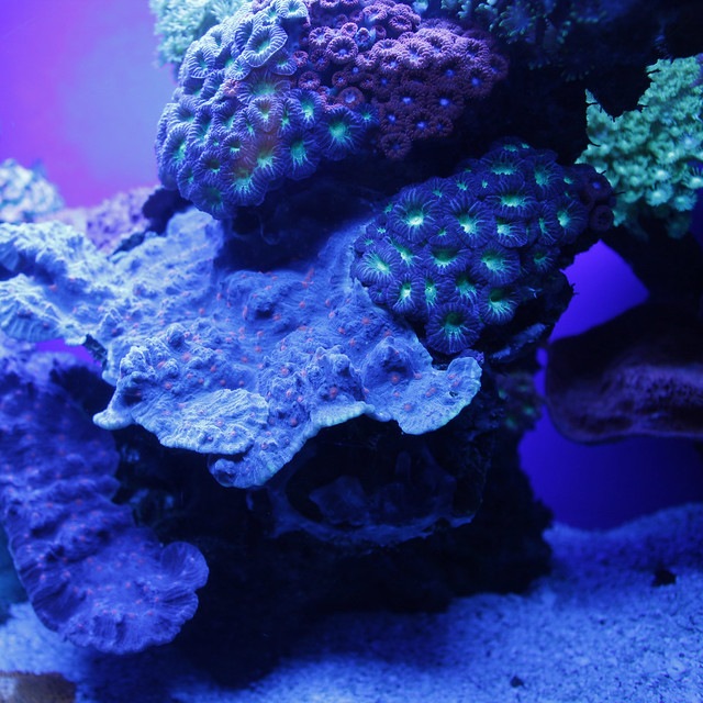 Blue reef aquarium lighting