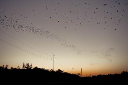 A Snake of Bats