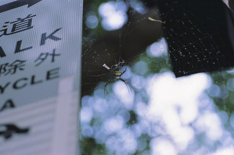 3月初第一次拍正片 (Kodak EB3)