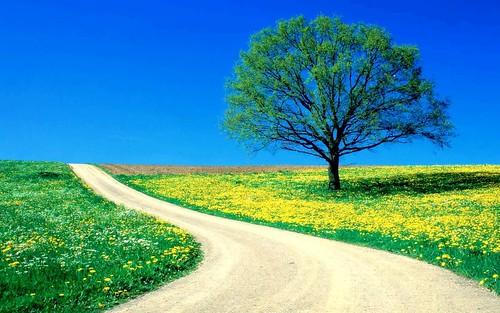 sfondo desktop primavera