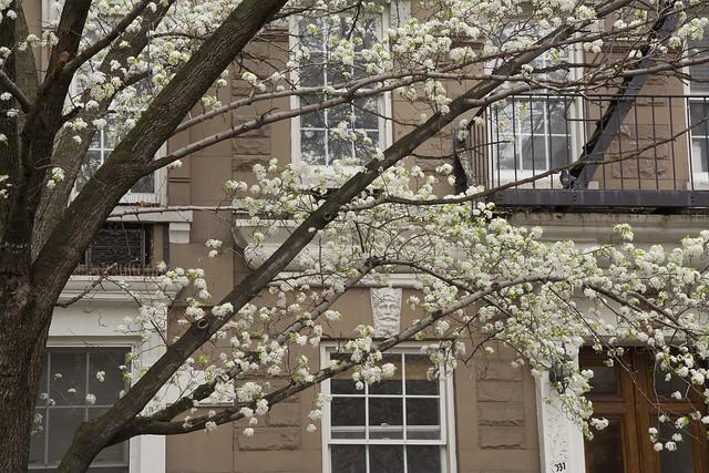365.215 Flowers in Chelsea
