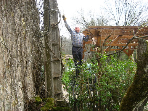 Dad sorting out the wisteria