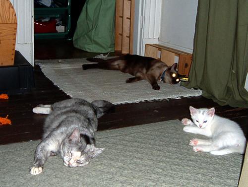 hotcats