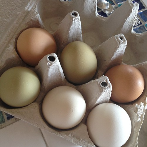 Got some colored eggs for my next #OBHfood meal! It's nice having chefs as neighbors.
