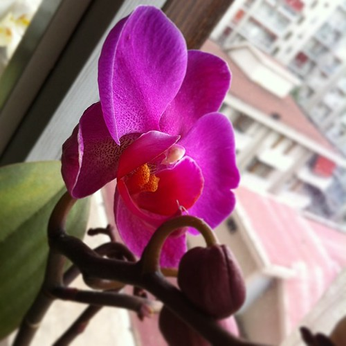 Another one is blooming:) Un'altra sta fiorendo :)