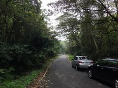 完整的林相要開發當停車場。