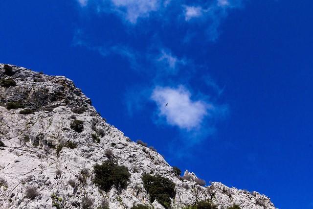 Bird above mountain