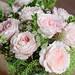 Keira rose - By  David Austin Roses Ltd